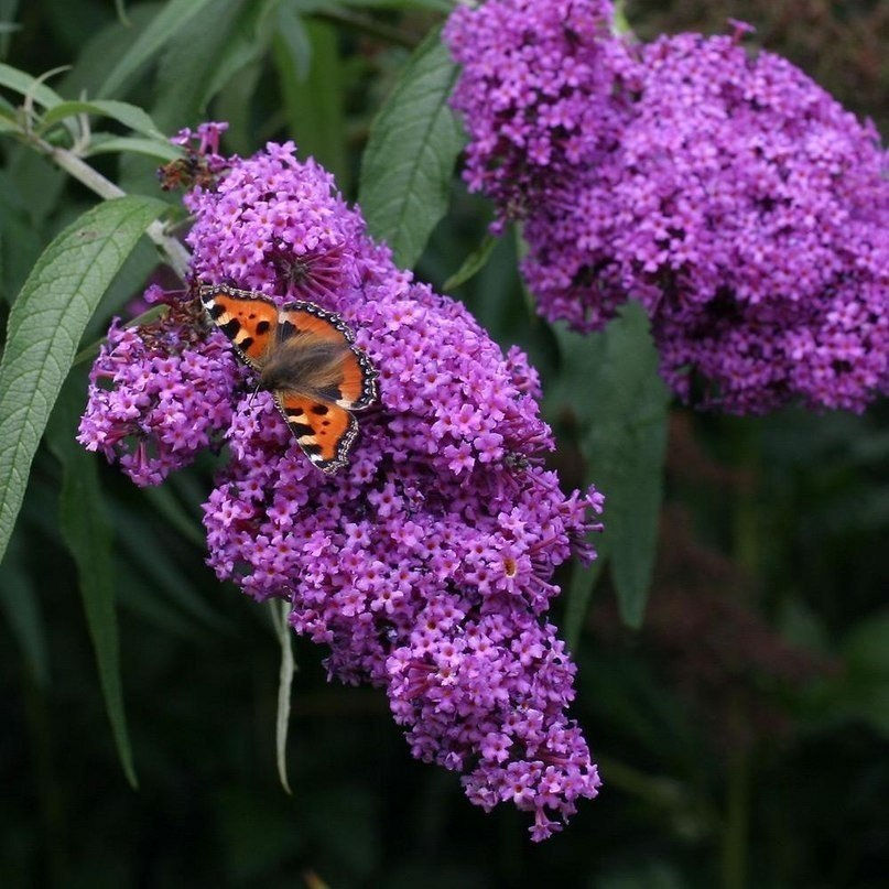 16246 download wallpaper Plants, Butterflies, Flowers, Insects screensavers and pictures for free