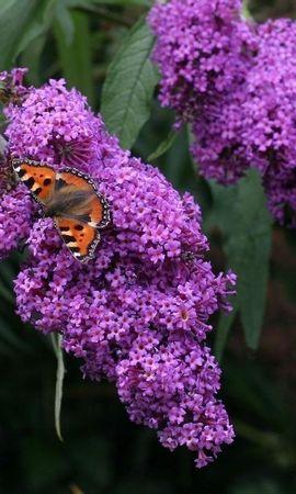 16246 скачать обои Растения, Бабочки, Цветы, Насекомые - заставки и картинки бесплатно