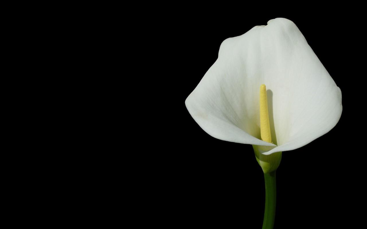 17926 скачать обои Растения, Цветы - заставки и картинки бесплатно