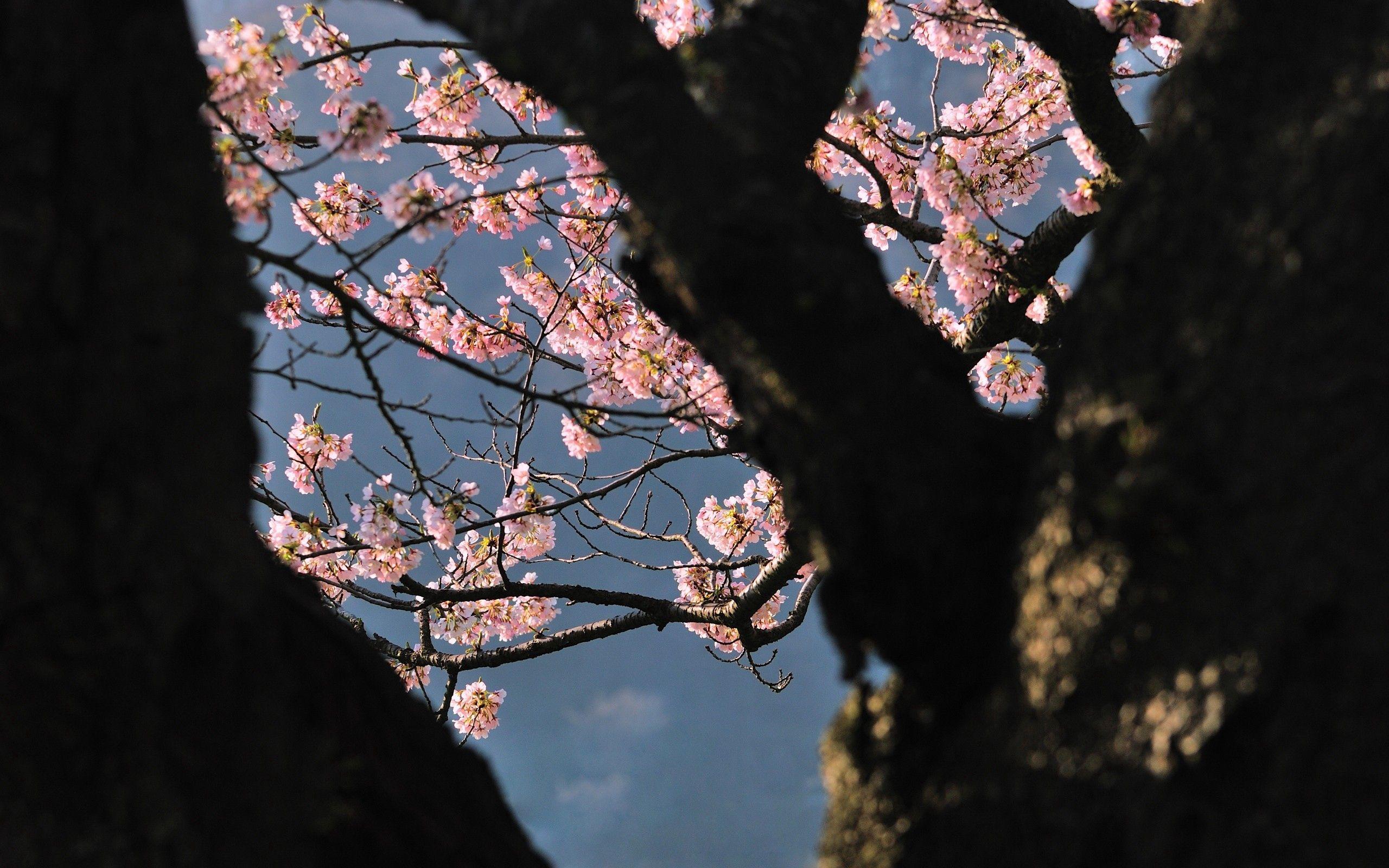 153667 descargar fondo de pantalla Naturaleza, Madera, Árbol, Sombra, Rama, Flores: protectores de pantalla e imágenes gratis