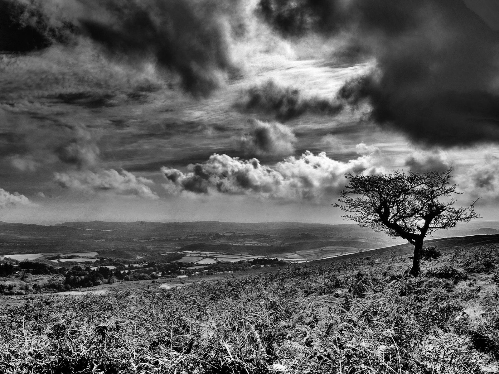 Скачать картинку Пейзаж, Деревья, Трава, Небо в телефон бесплатно.