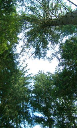 25 скачать обои Пейзаж, Деревья - заставки и картинки бесплатно