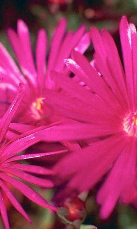 8295 скачать обои Растения, Цветы - заставки и картинки бесплатно