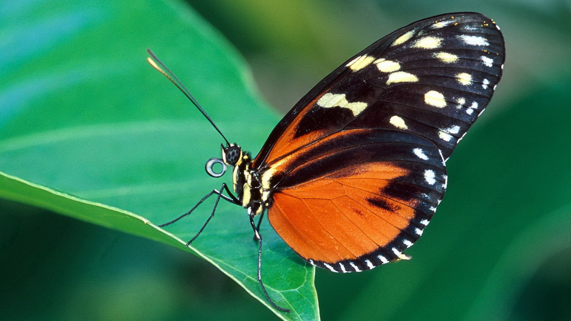 125529 Screensavers and Wallpapers Butterfly for phone. Download Grass, Leaves, Patterns, Macro, Butterfly, Wings pictures for free