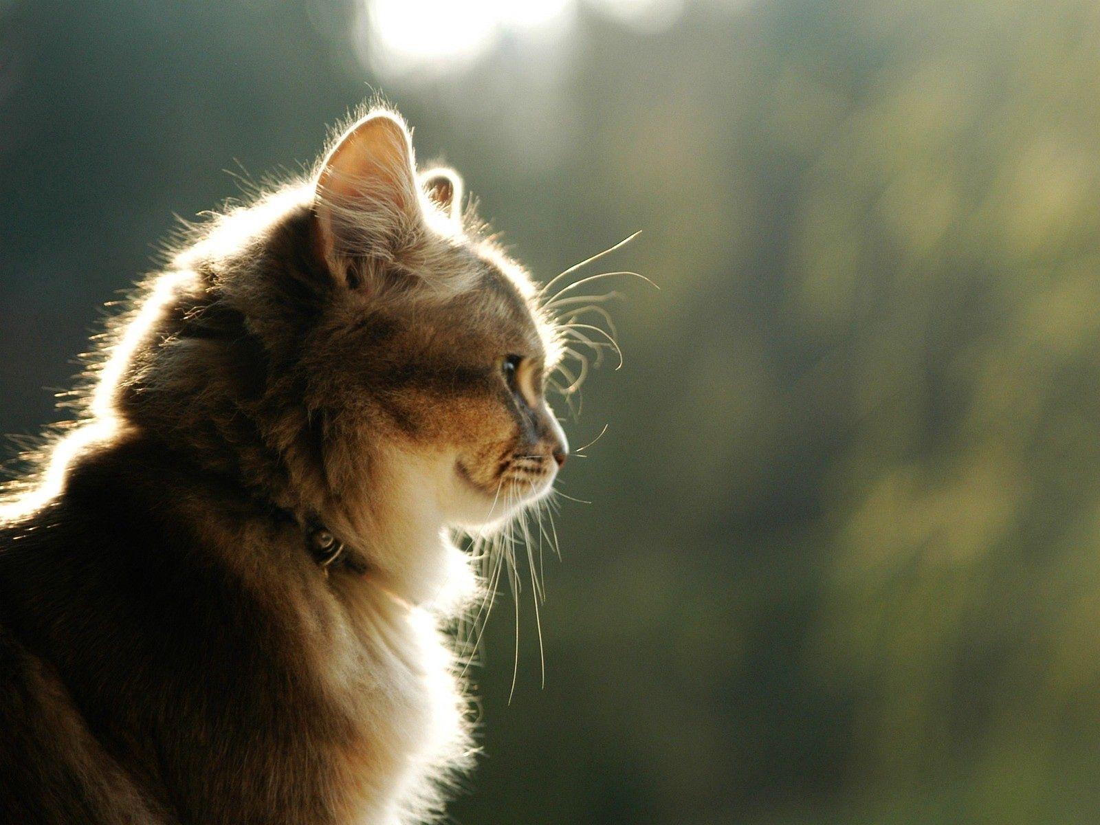 119309 скачать обои Животные, Кот, Морда, Свет, Профиль, Пушистый - заставки и картинки бесплатно