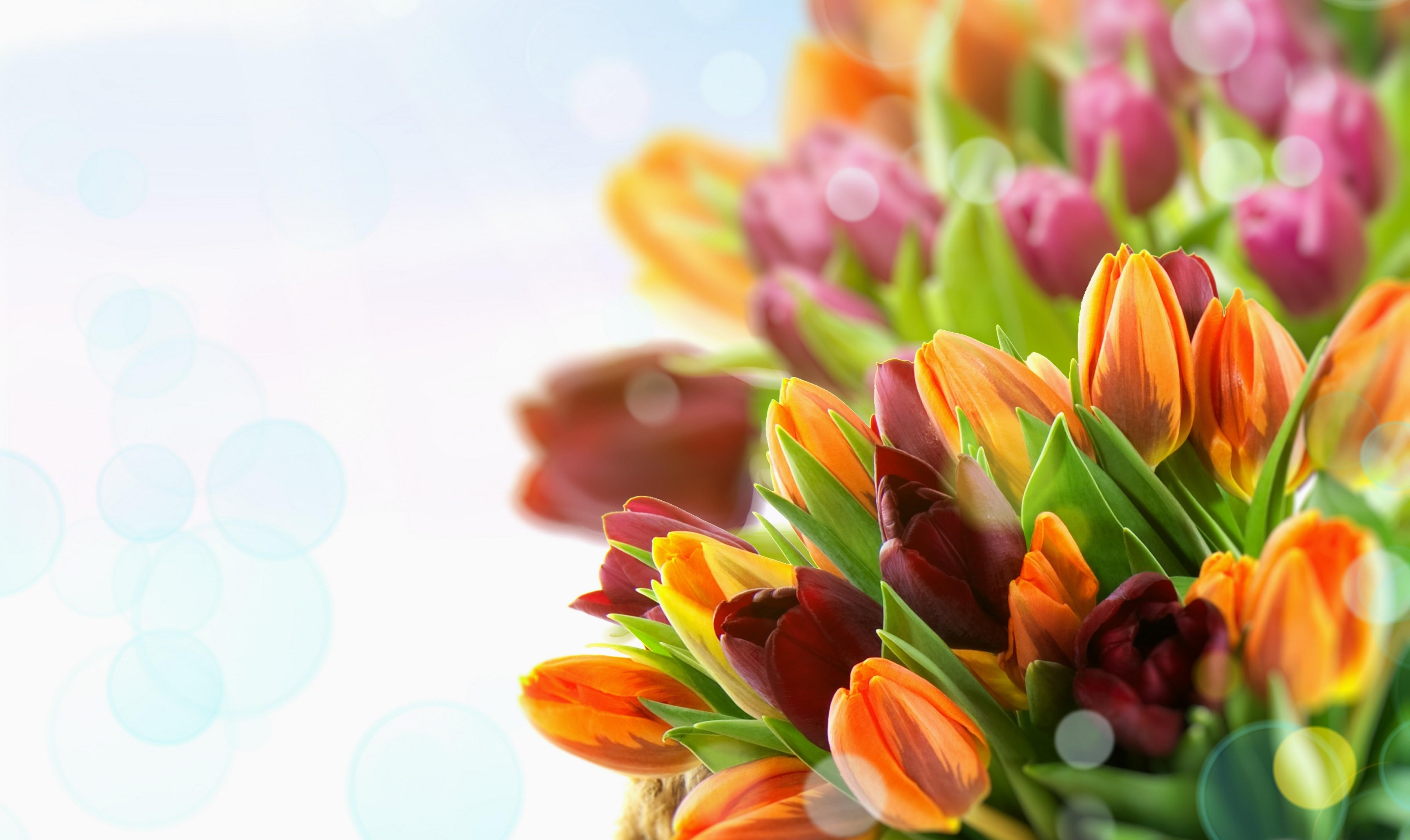 112706 Screensavers and Wallpapers Tulips for phone. Download Flowers, Tulips, Multicolored, Close-Up pictures for free
