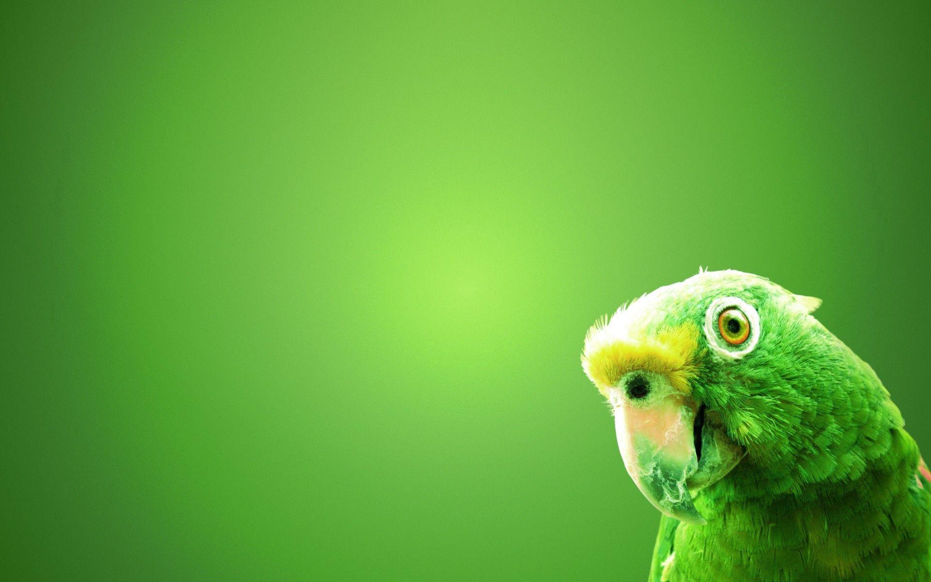 73613 télécharger le fond d'écran Contexte, Perroquets, Oiseau, Le Bec, Bec, Minimalisme - économiseurs d'écran et images gratuitement