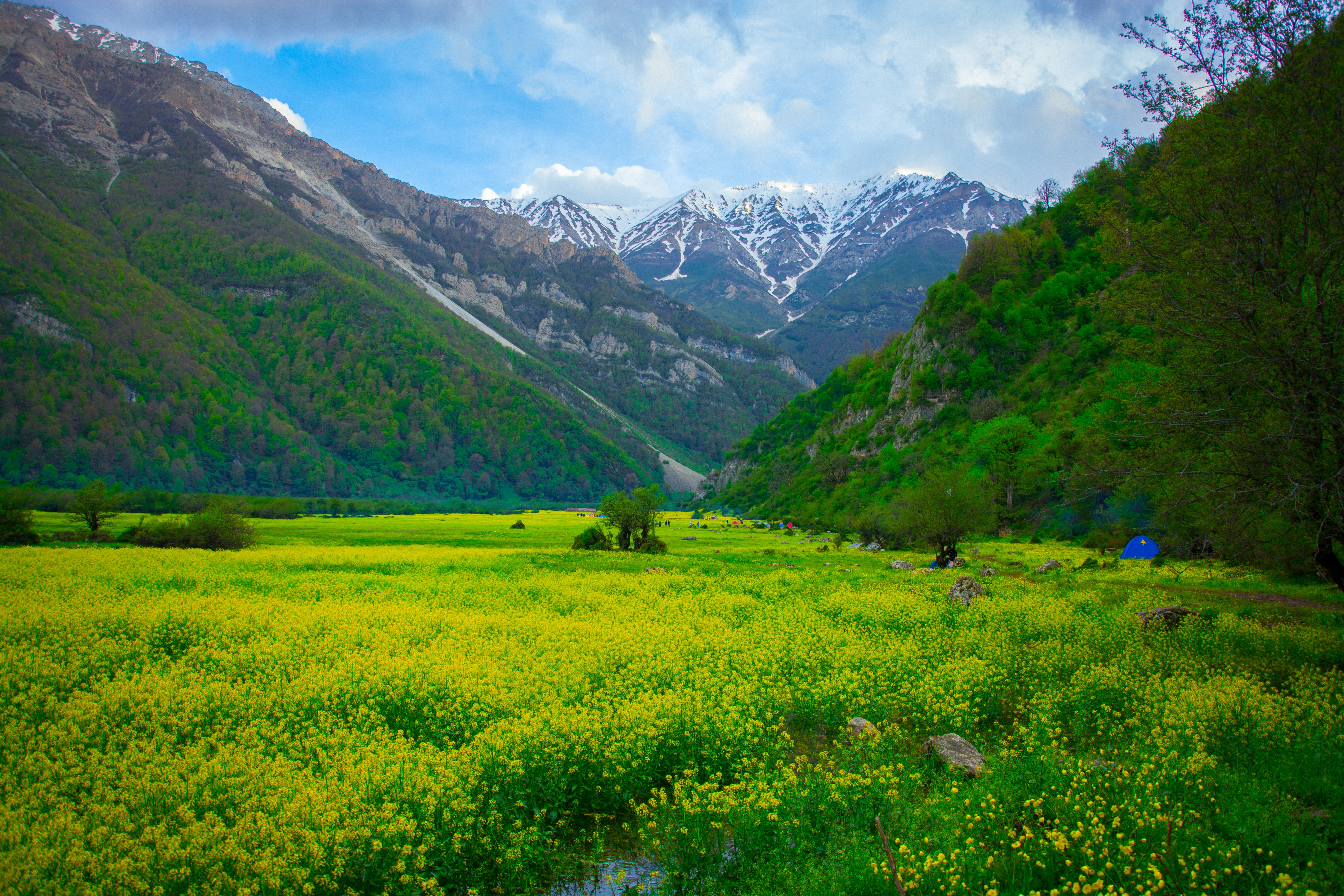 149520 download wallpaper Nature, Polyana, Glade, Mountains, Landscape, Flowers screensavers and pictures for free