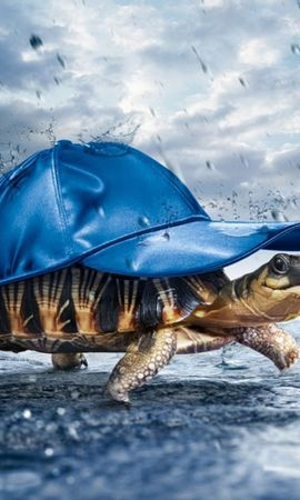 28097 download wallpaper Funny, Animals, Turtles screensavers and pictures for free