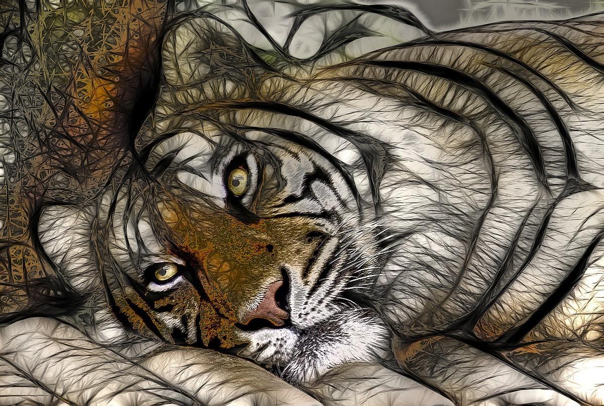 11101 télécharger le fond d'écran Animaux, Art, Tigres, Dessins - économiseurs d'écran et images gratuitement