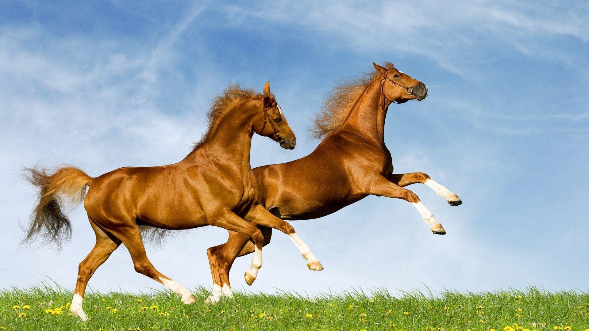 85711 скачать обои Животные, Лошади, Поле, Трава, Скакать - заставки и картинки бесплатно