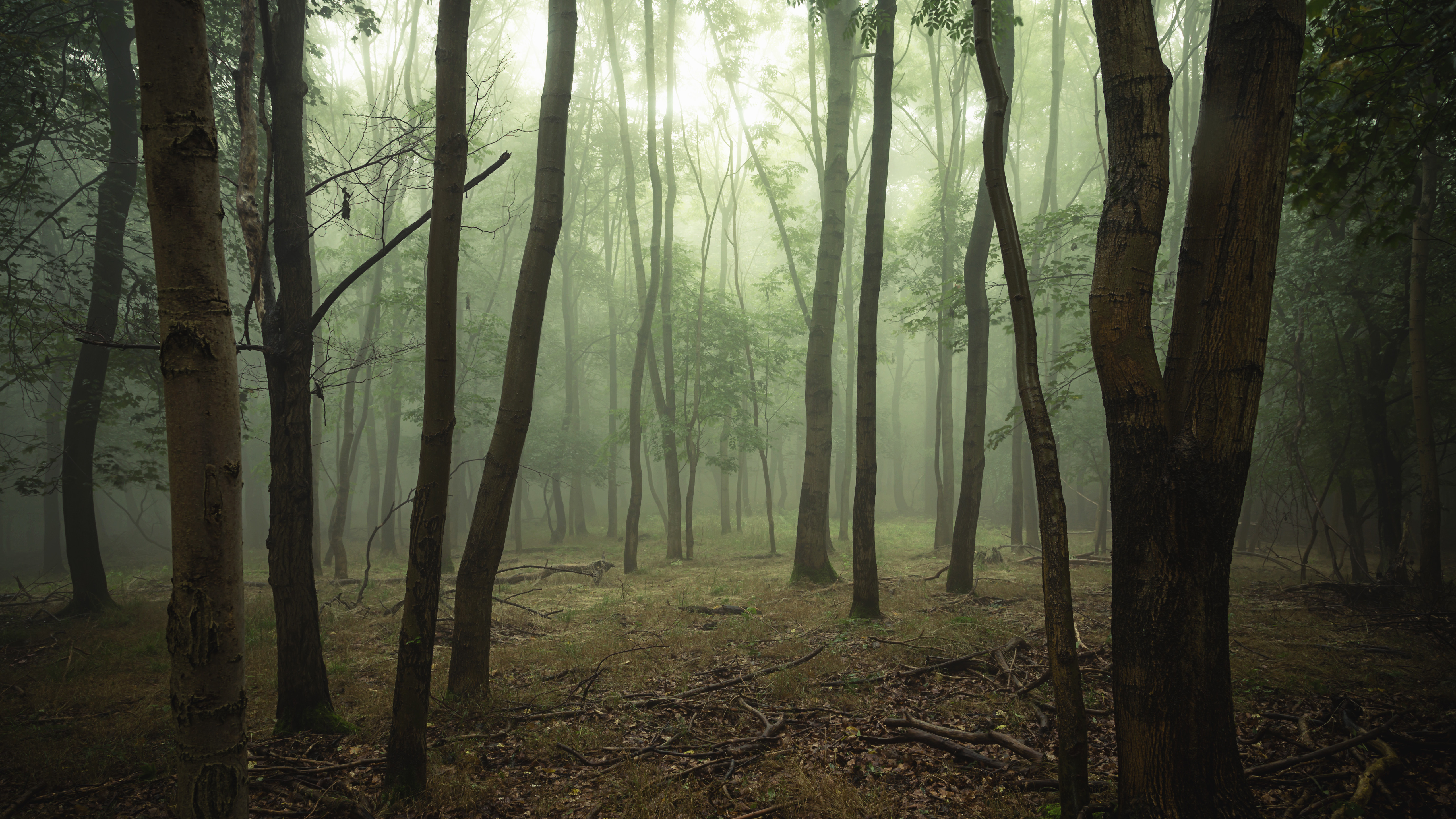 155886 download wallpaper Nature, Forest, Trees, Fog, Branches screensavers and pictures for free
