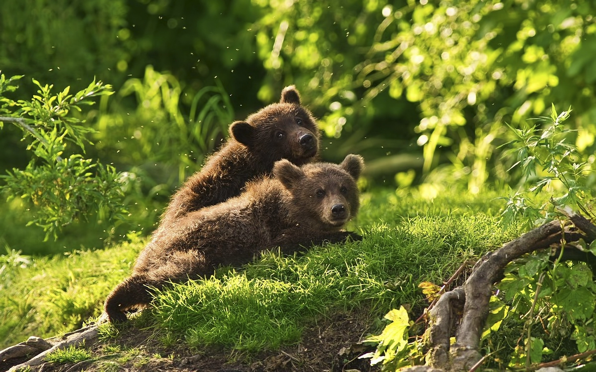 30148 download wallpaper Animals, Bears screensavers and pictures for free