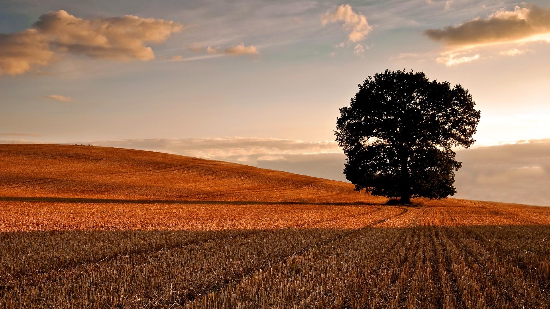 28297 скачать обои Пейзаж, Деревья, Поля - заставки и картинки бесплатно