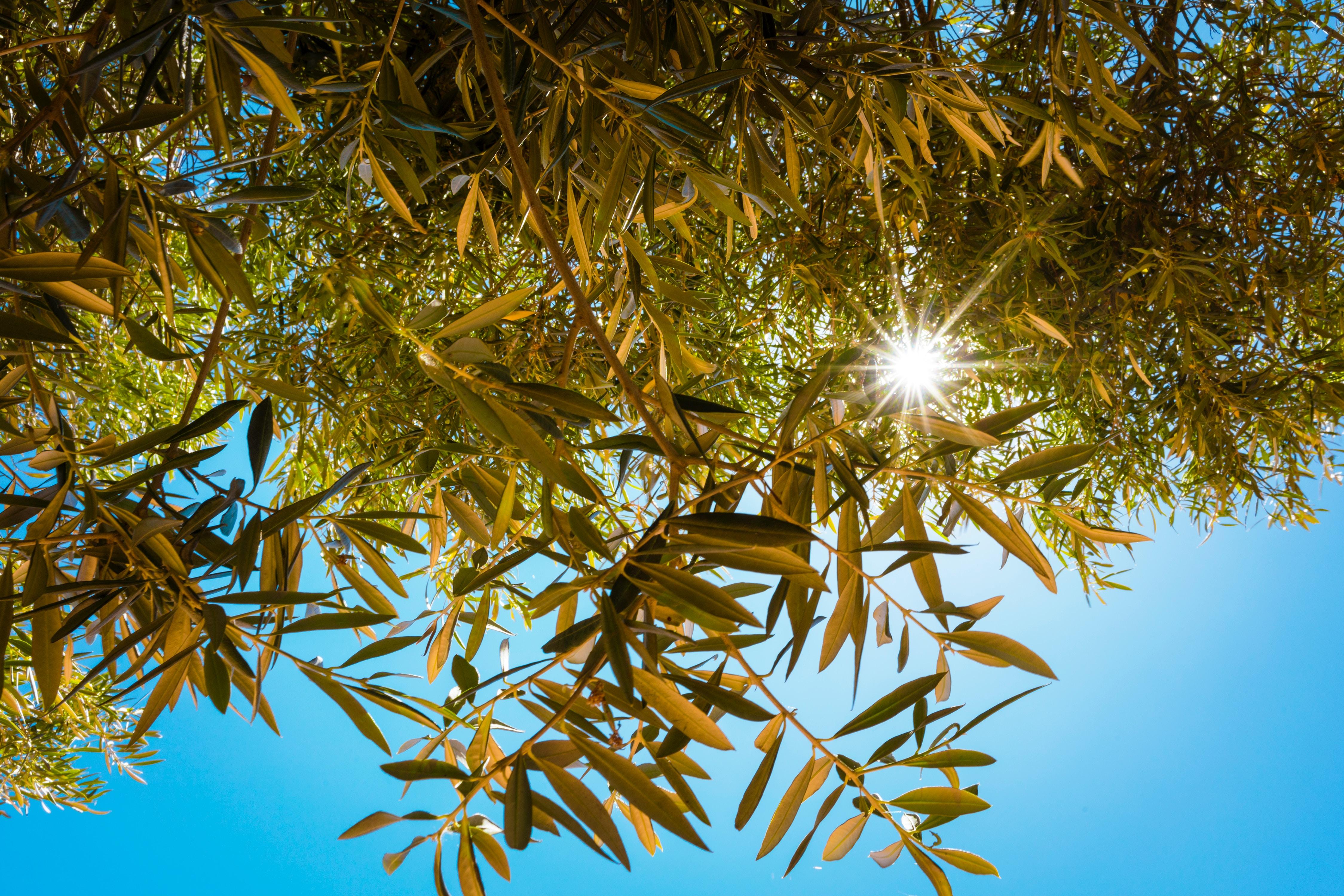 90866壁紙のダウンロード自然, 日光, ブランチ, 枝, ビーム, 光線, スカイ-スクリーンセーバーと写真を無料で
