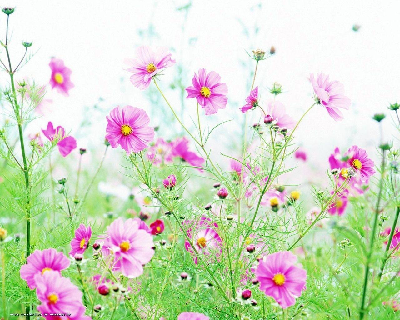 6585 скачать обои Растения, Цветы - заставки и картинки бесплатно