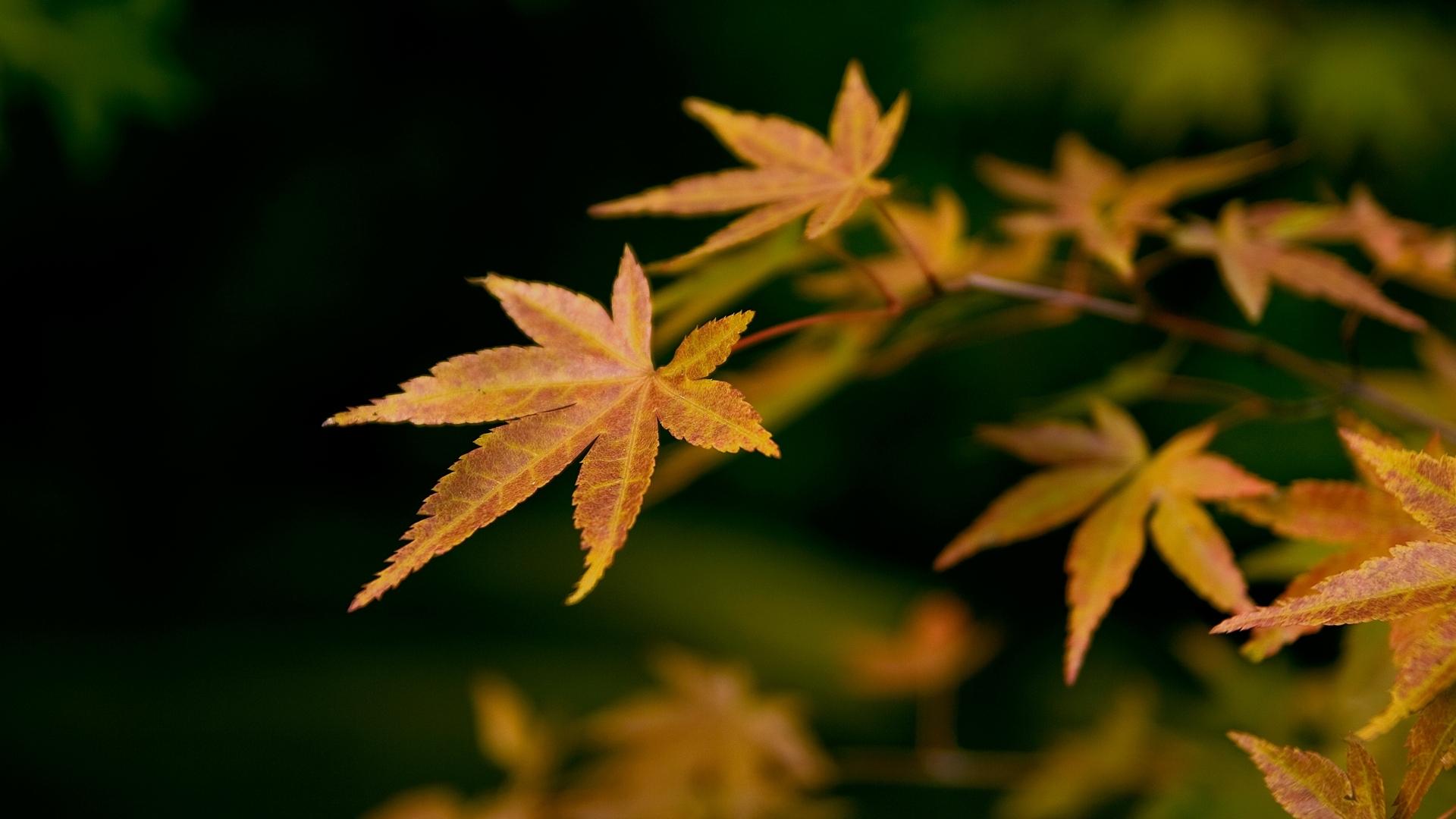 47835 скачать обои Растения, Листья - заставки и картинки бесплатно