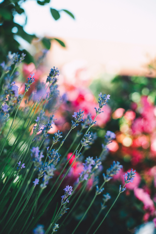 107784 завантажити шпалери Квіти, Розмитість, Гладкою, Поле, Польовий, Стебла - заставки і картинки безкоштовно