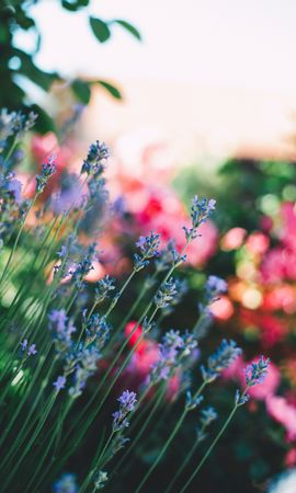 107784 download wallpaper Flowers, Field, Stems, Blur, Smooth screensavers and pictures for free
