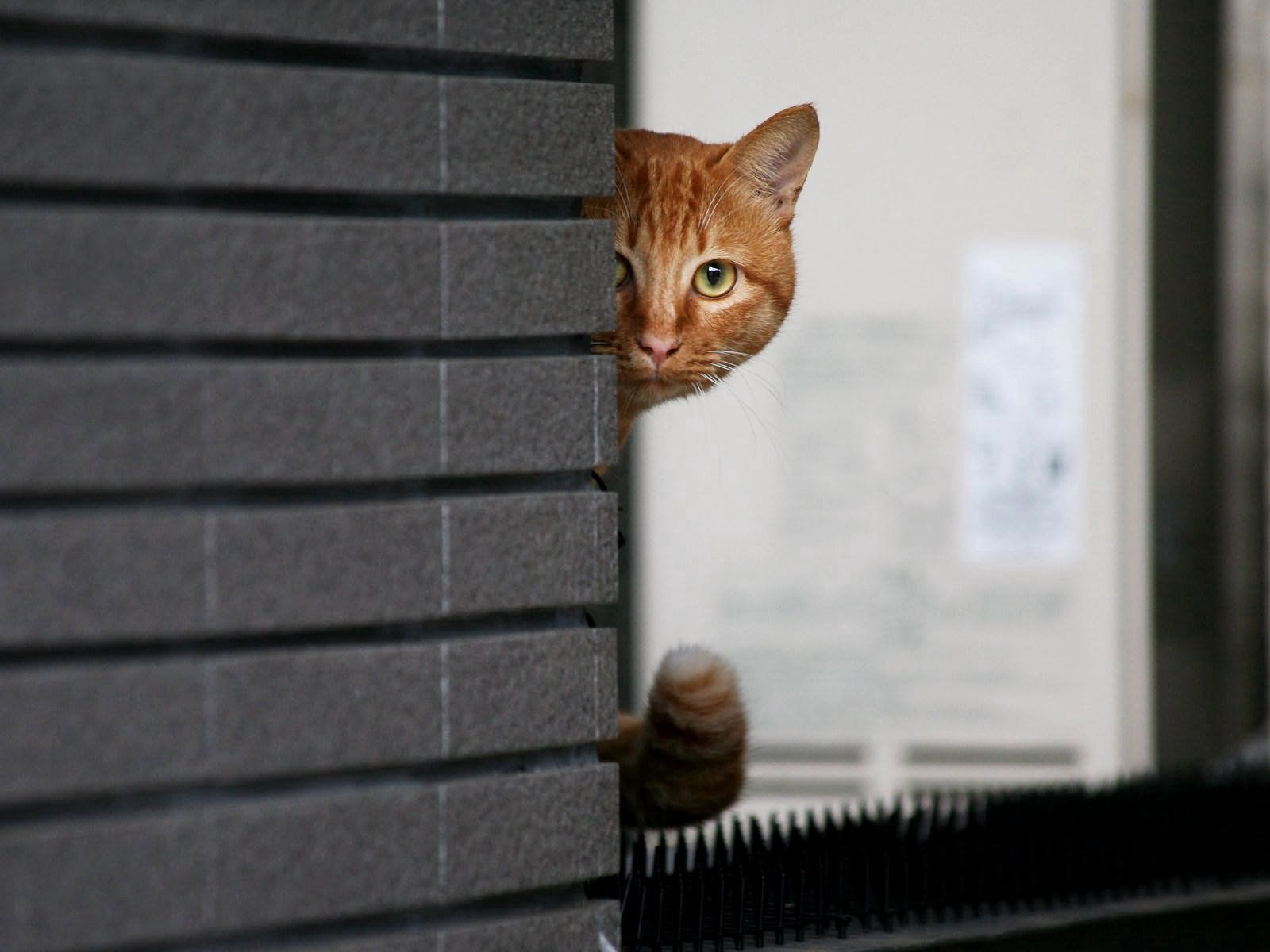 120172 download wallpaper Animals, Cat, Peek Out, Look Out, Eyes, Muzzle screensavers and pictures for free