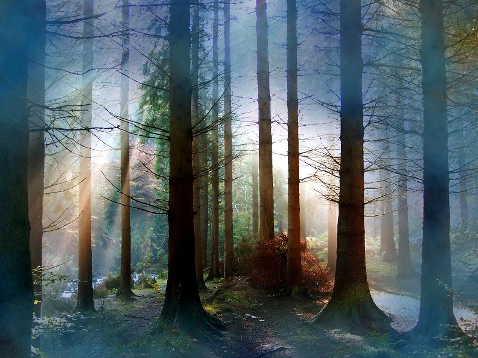 5424 скачать обои Пейзаж, Деревья - заставки и картинки бесплатно