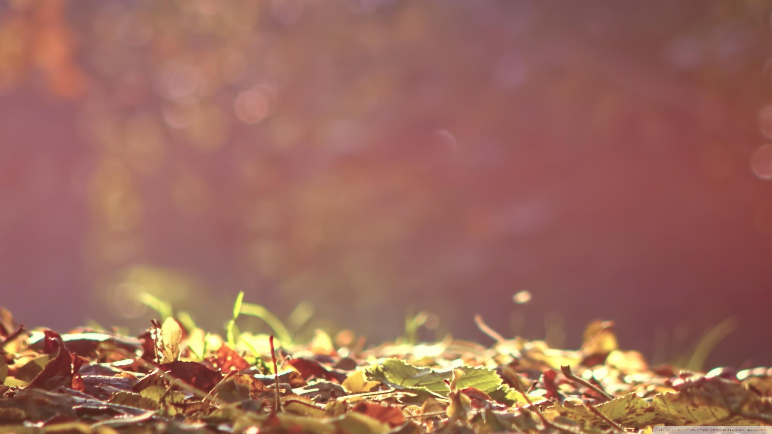 20143 скачать обои Фон, Осень, Листья - заставки и картинки бесплатно