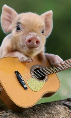 97722 download wallpaper Animals, Pig, Piglet, Guitar screensavers and pictures for free