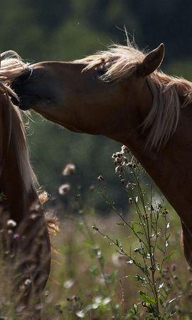 96606 baixar papel de parede Animais, Cavalos, Cuidado, Casal, Par, Campo, Grama, Ternura, Sombra - protetores de tela e imagens gratuitamente