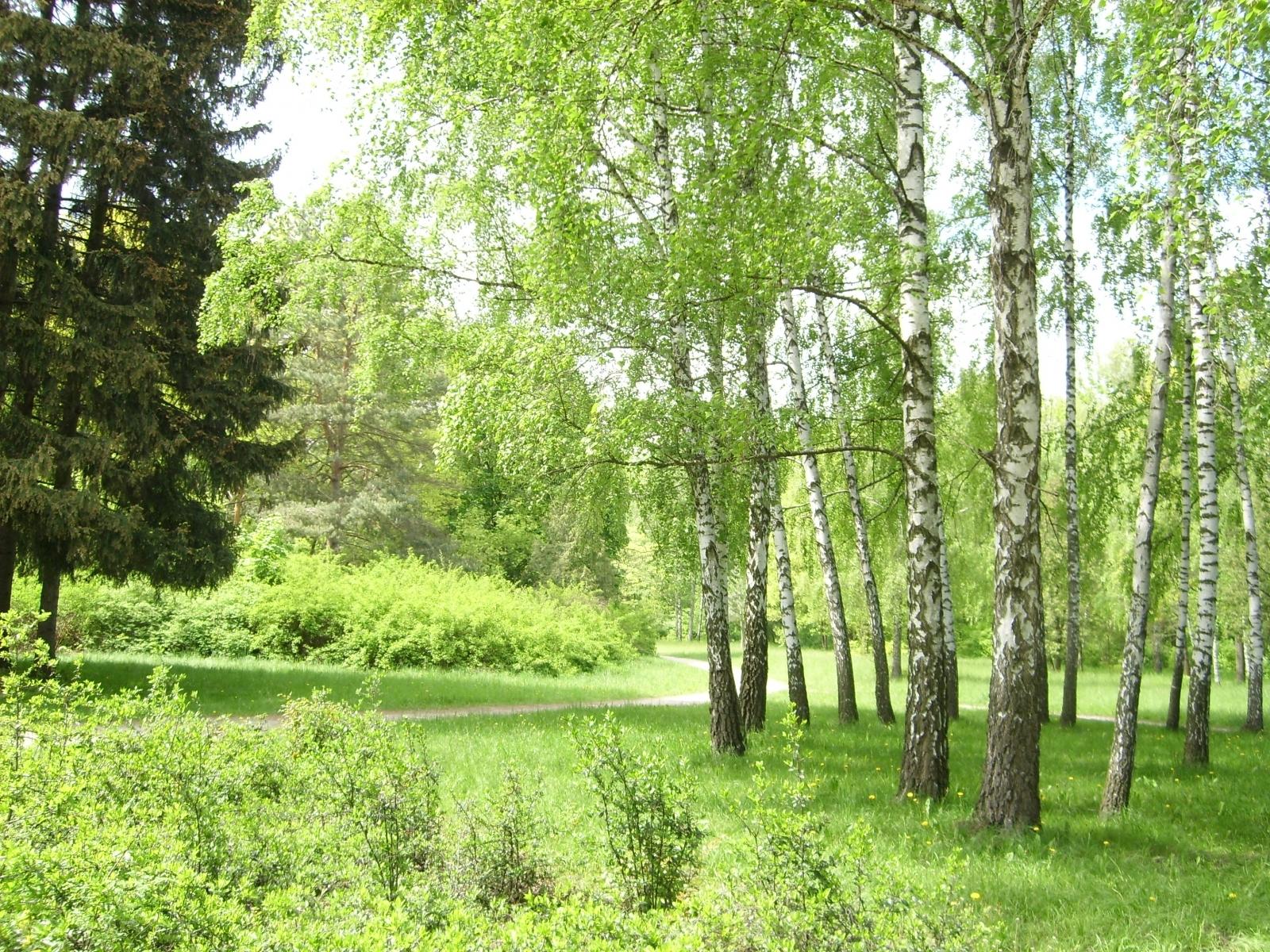 4997 скачать обои Пейзаж, Деревья - заставки и картинки бесплатно