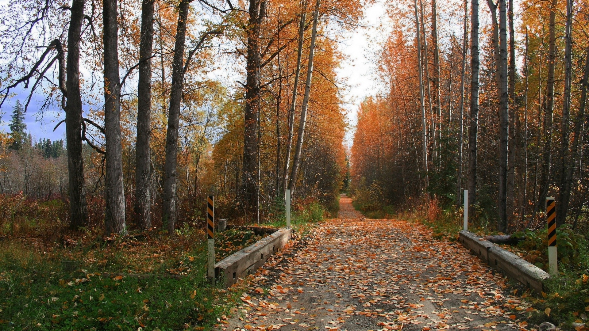 23380 скачать обои Пейзаж, Деревья, Дороги, Осень - заставки и картинки бесплатно
