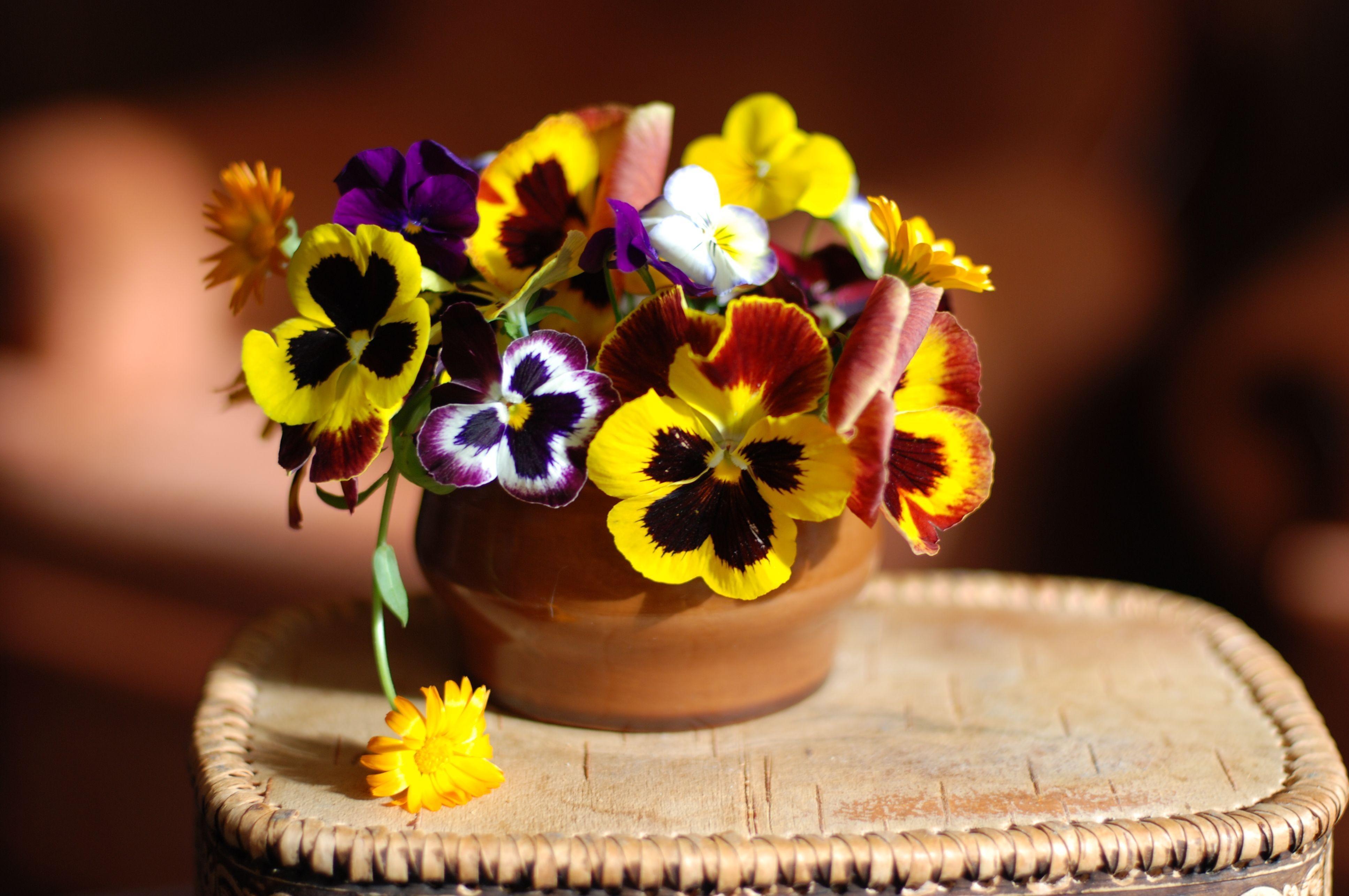 156130 Заставки и Обои Анютины Глазки на телефон. Скачать Цветы, Анютины Глазки, Ваза, Подставка картинки бесплатно