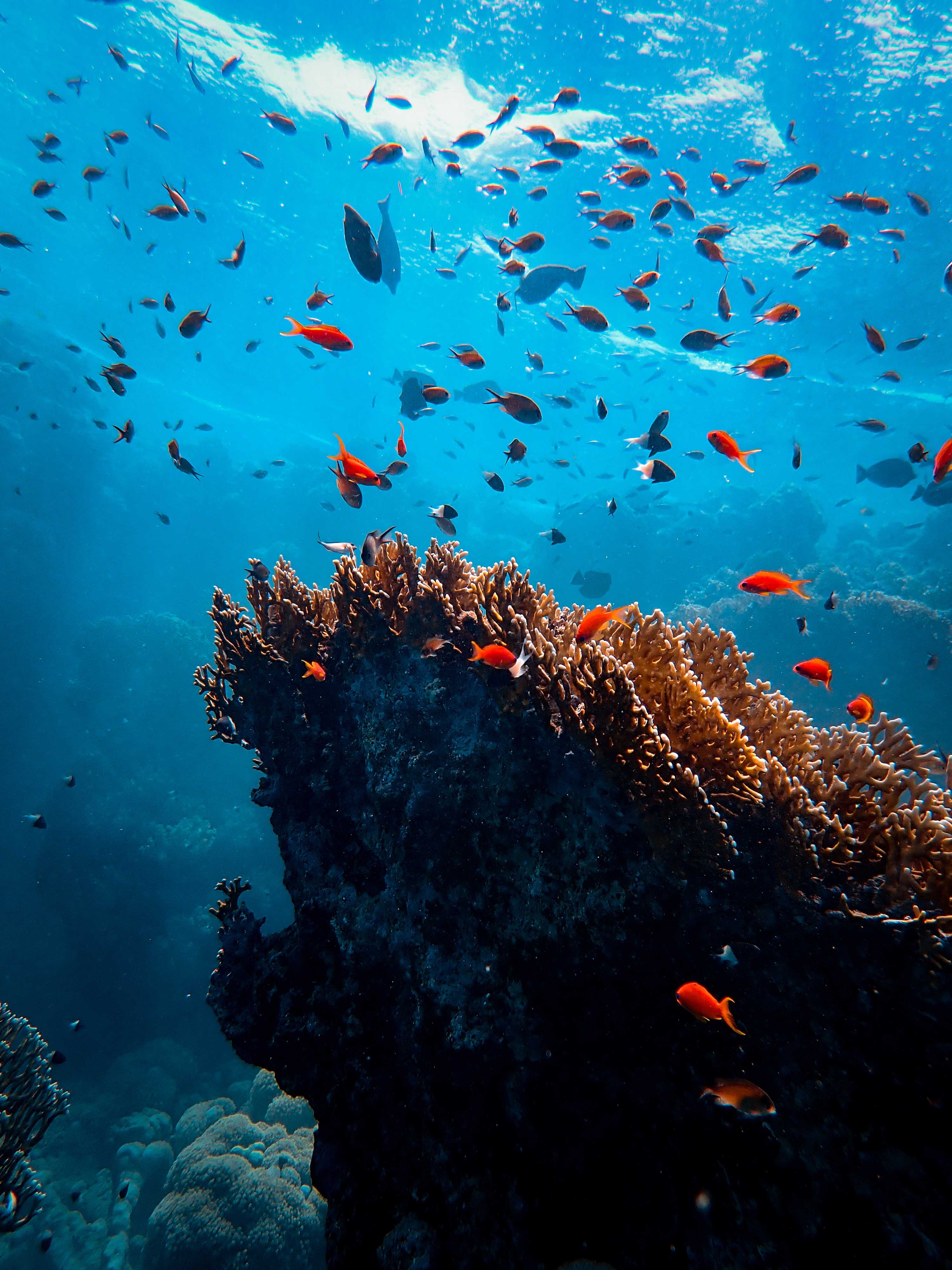 119182 download wallpaper Animals, Seaweed, Algae, Underwater World, Fishes, Coral screensavers and pictures for free