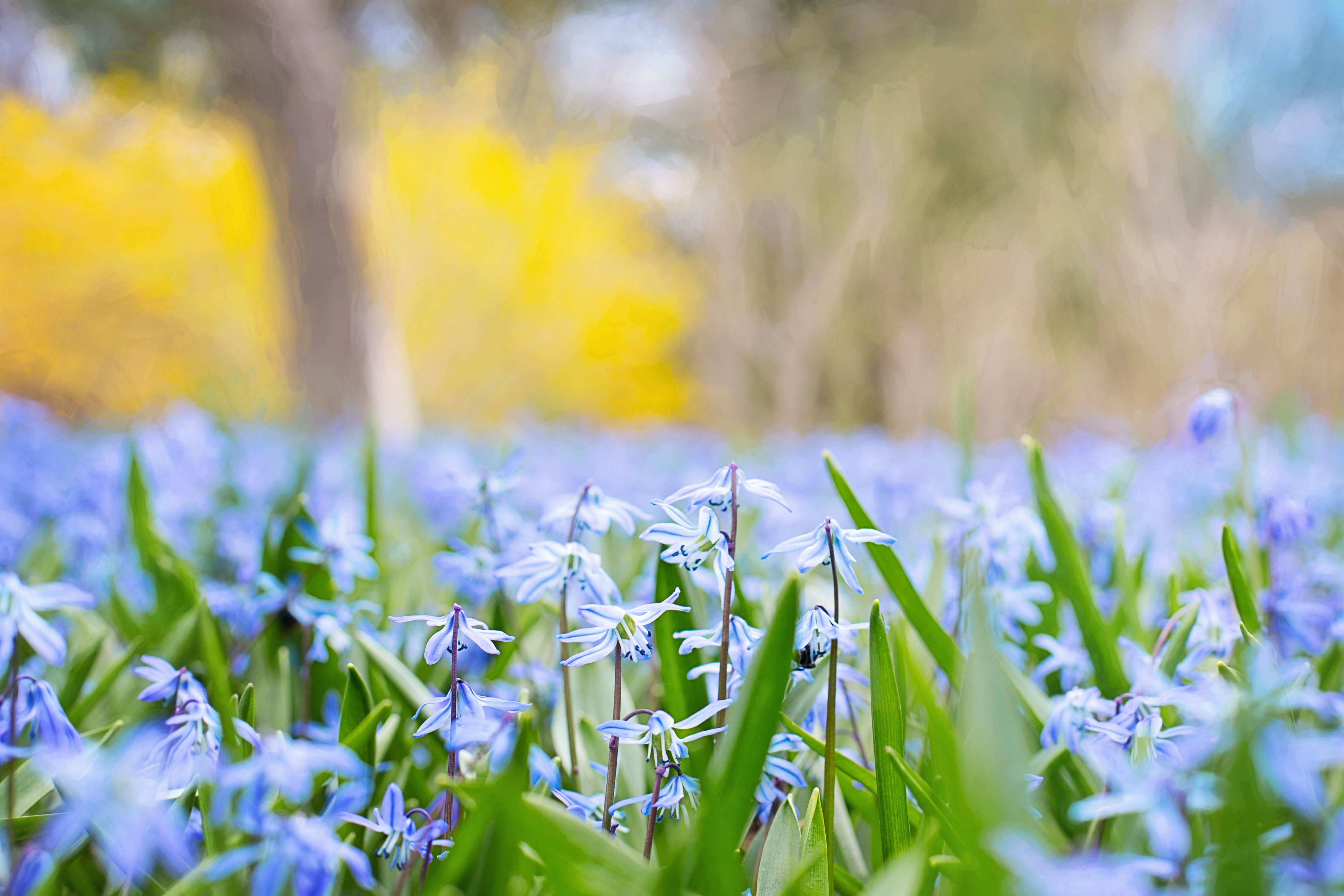 157009 download wallpaper Nature, Grass, Field, Blur, Smooth, Flowers screensavers and pictures for free