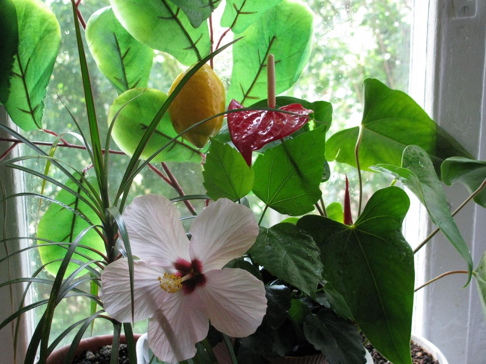 1414 скачать обои Растения, Цветы, Листья - заставки и картинки бесплатно