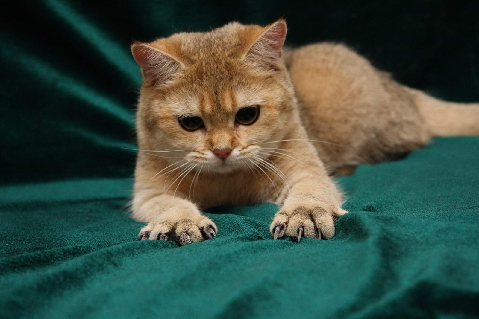 111467 download wallpaper Animals, Cat, Redhead, Claws, Paws, Nice, Sweetheart screensavers and pictures for free
