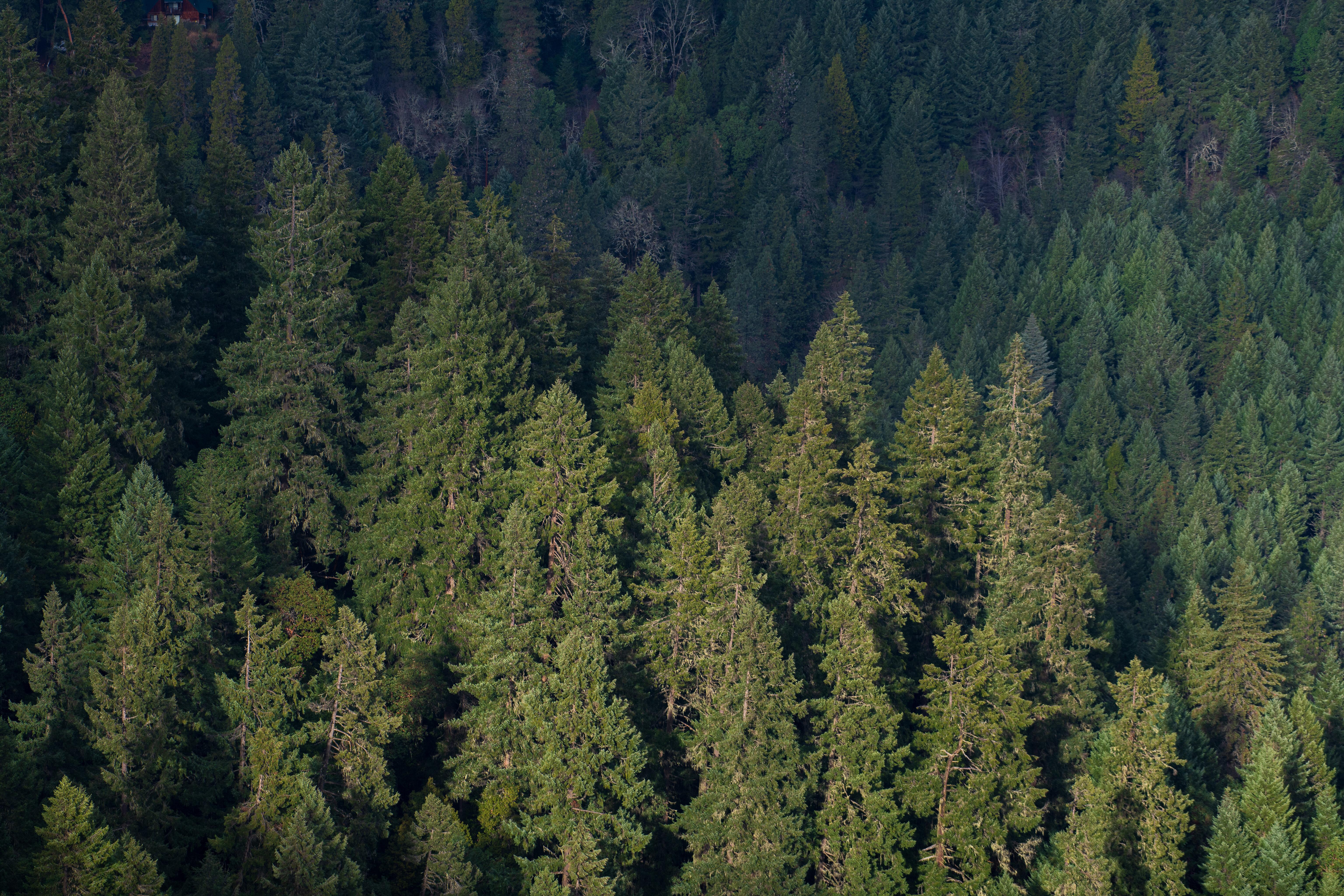 155877 免費下載壁紙 性质, 森林, 从上面看, 顶视图, 树, 绿色的, 松 屏保和圖片
