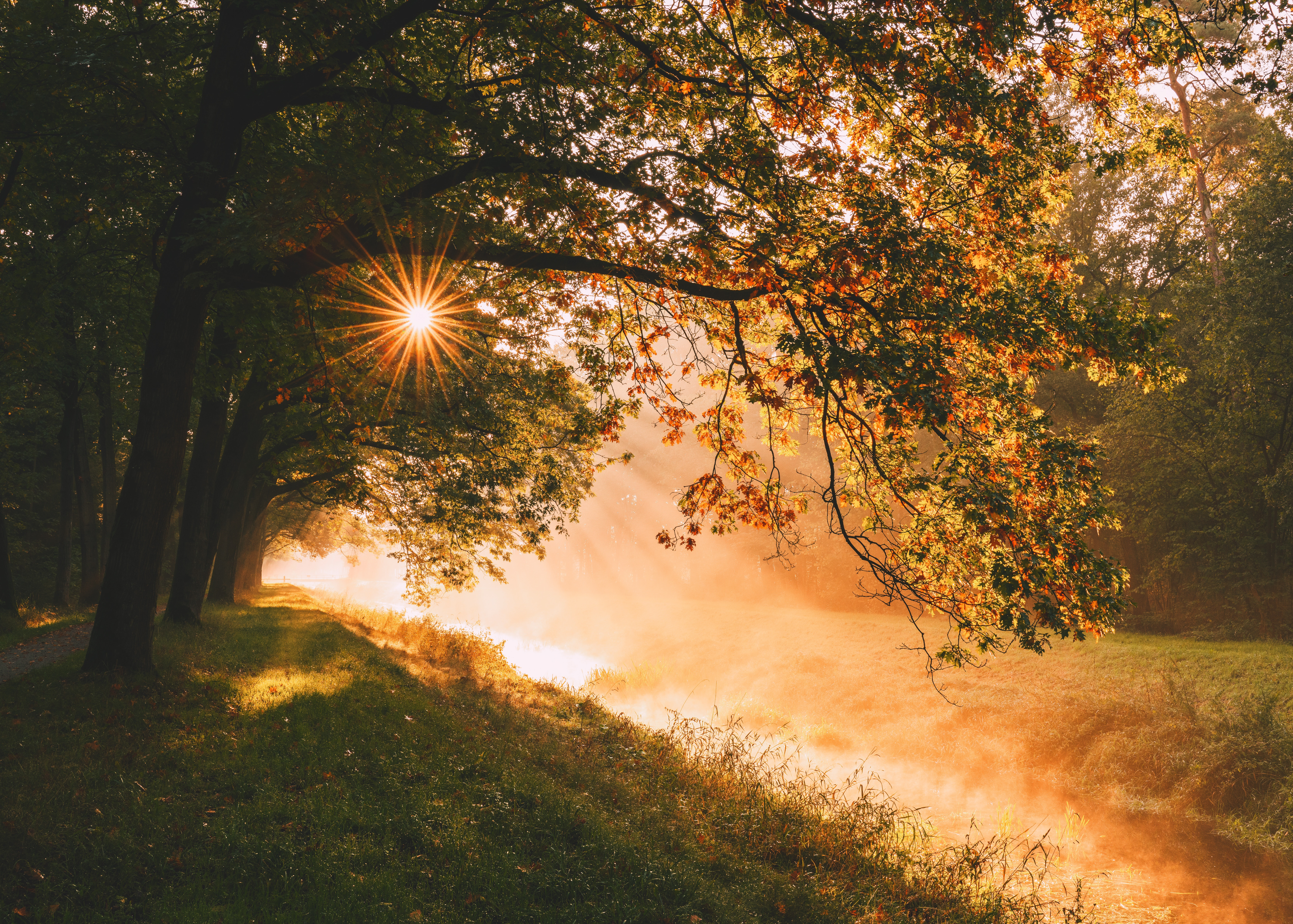 134061 Screensavers and Wallpapers Beams for phone. Download Landscape, Nature, Trees, Sun, Beams, Rays, Sunlight pictures for free