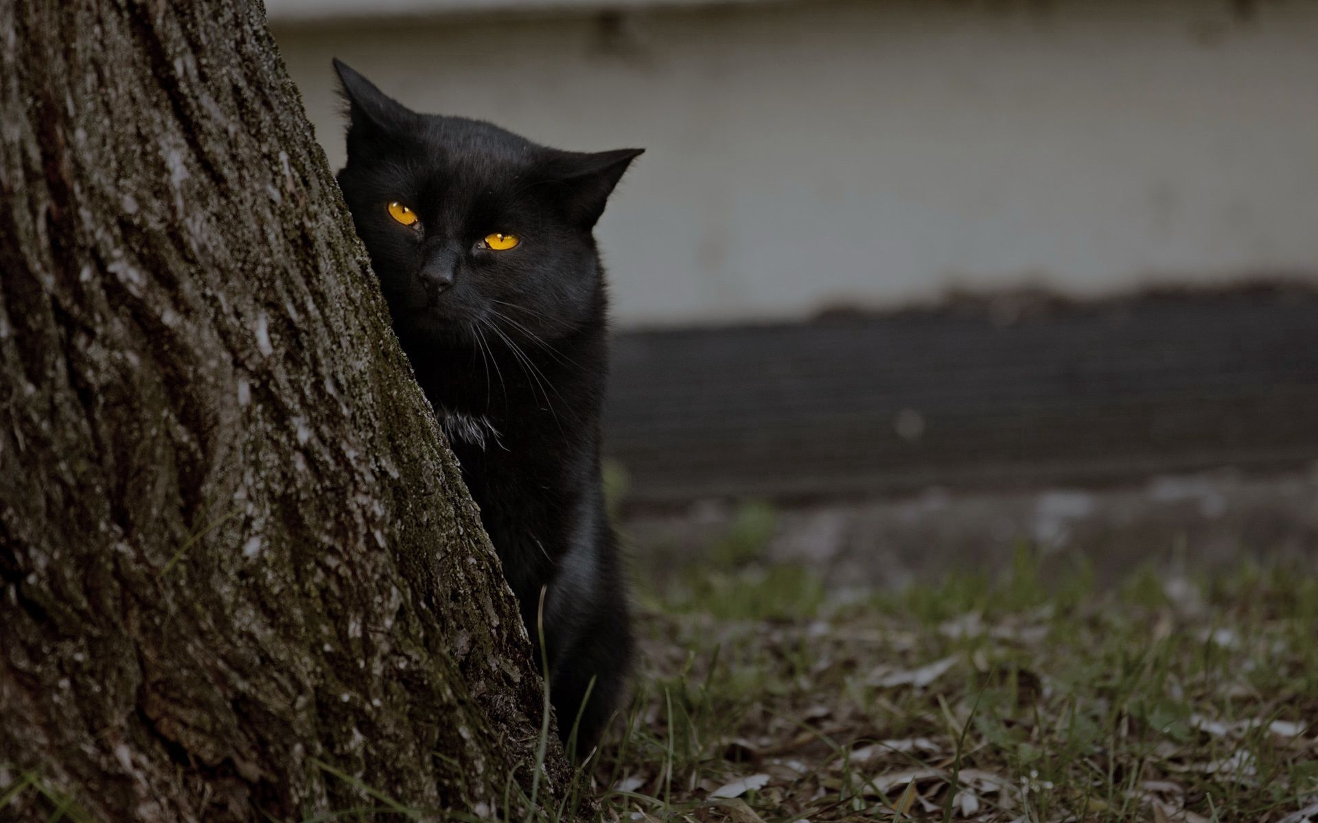 153426 download wallpaper Animals, Grass, Dark, Wood, Cat, Tree, Hide, Bark screensavers and pictures for free