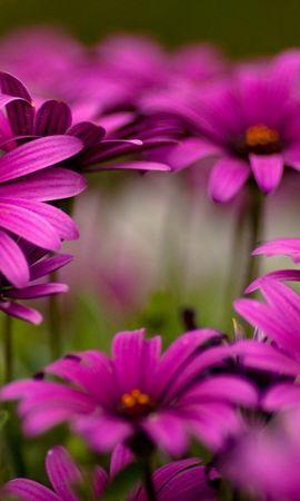 9437 скачать обои Растения, Цветы - заставки и картинки бесплатно