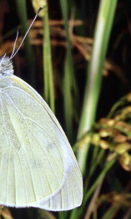 33470 Salvapantallas y fondos de pantalla Insectos en tu teléfono. Descarga imágenes de Mariposas, Insectos gratis