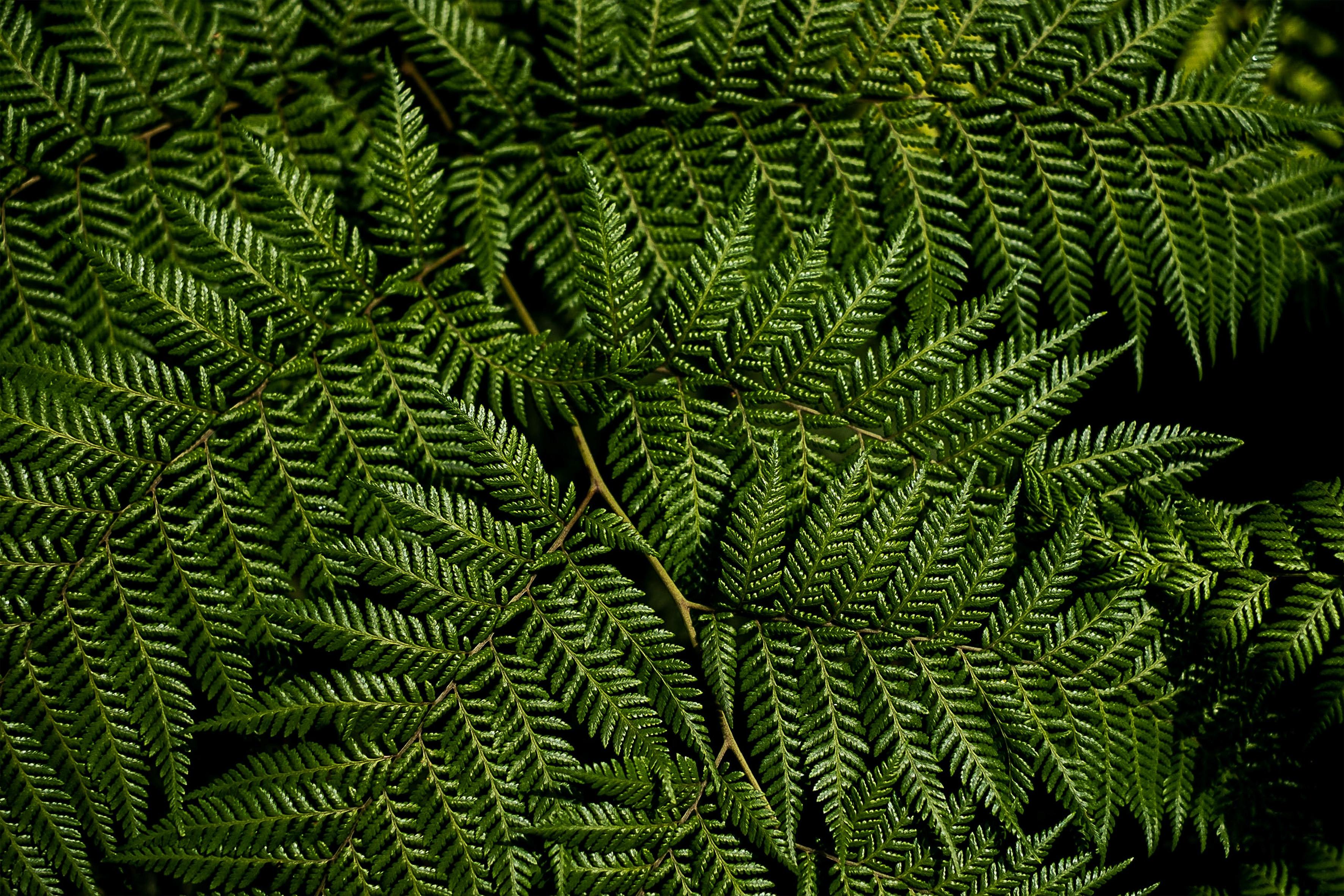 150992 скачать обои Природа, Папоротник, Листья, Ветки, Макро, Зеленый - заставки и картинки бесплатно