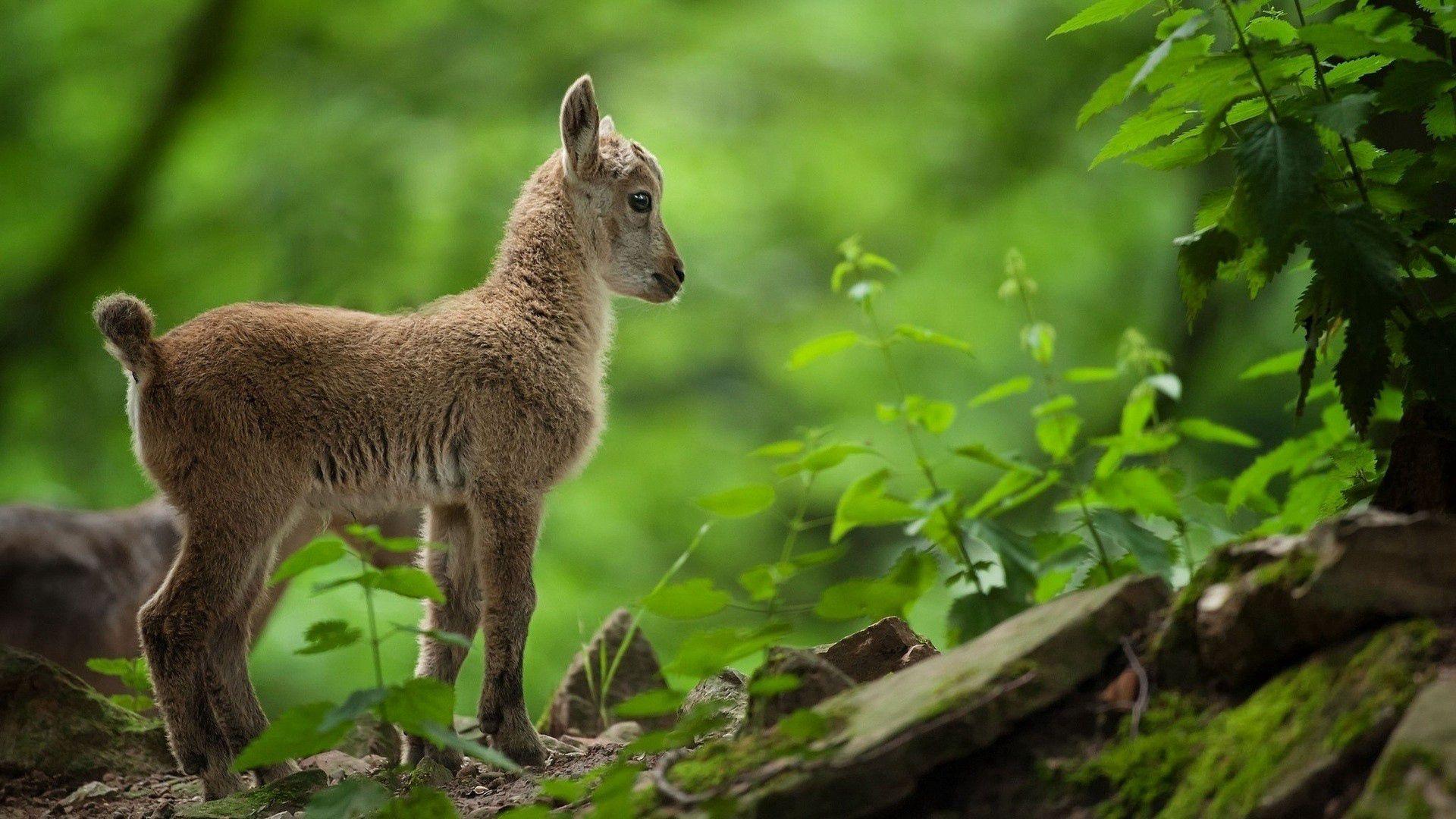 117716 Hintergrundbild herunterladen Tiere, Grass, Junge, Kind, Joey - Bildschirmschoner und Bilder kostenlos