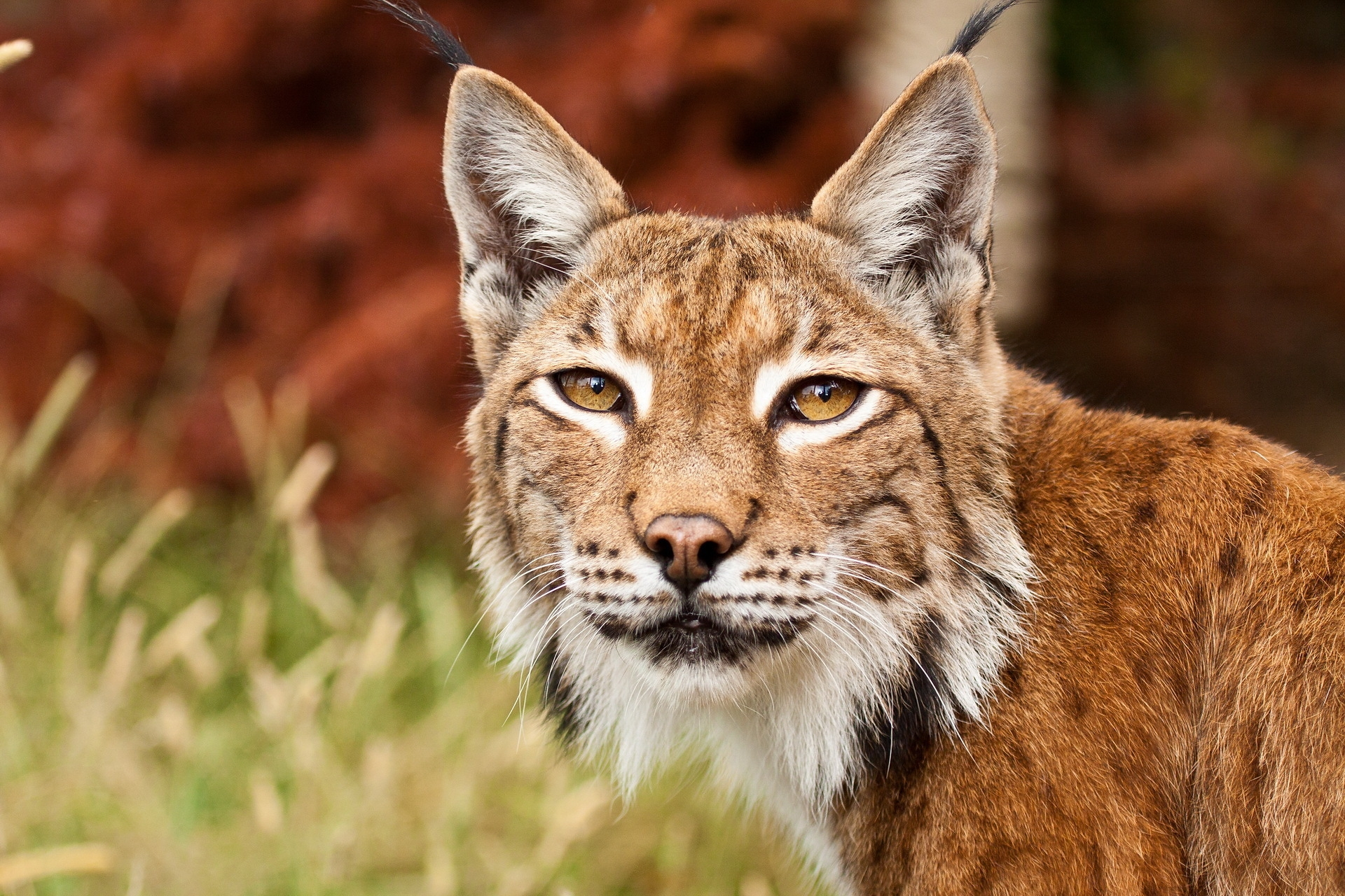 139824 download wallpaper Animals, Iris, Grass, Muzzle, Predator screensavers and pictures for free