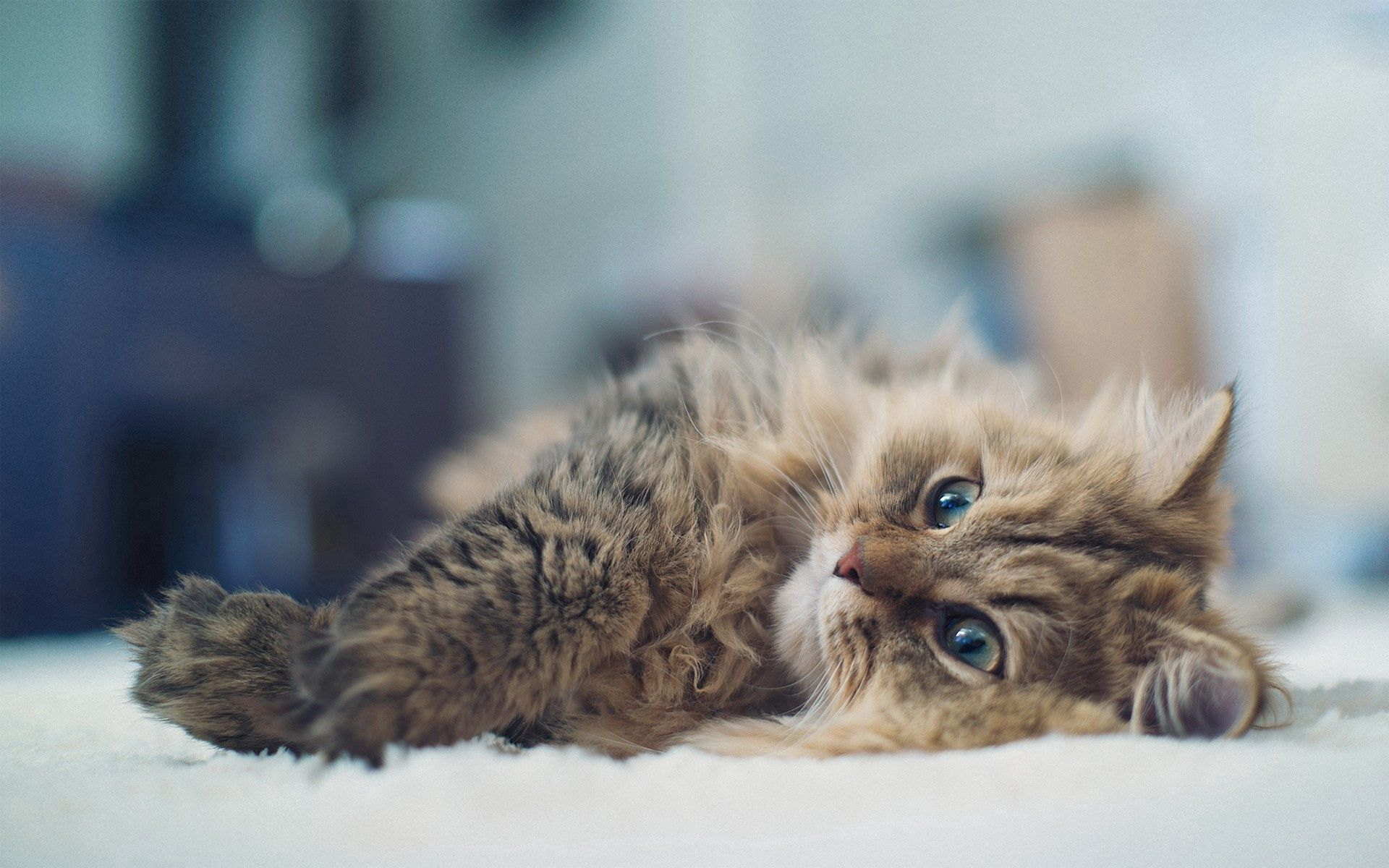 153639 download wallpaper Cat, Animals, Fluffy, To Lie Down, Lie screensavers and pictures for free