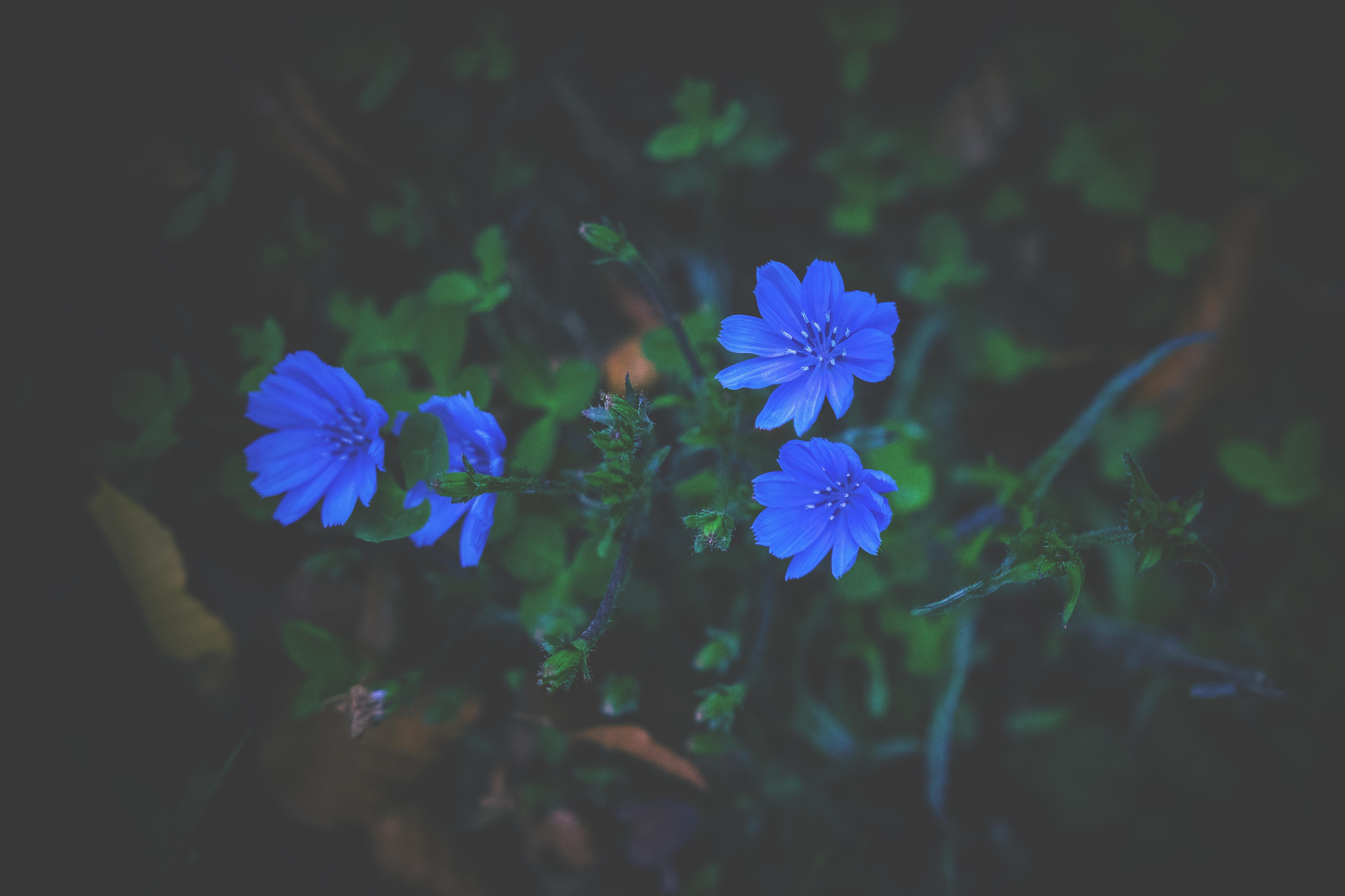 73928 скачать обои Темные, Трава, Синий, Цветы - заставки и картинки бесплатно