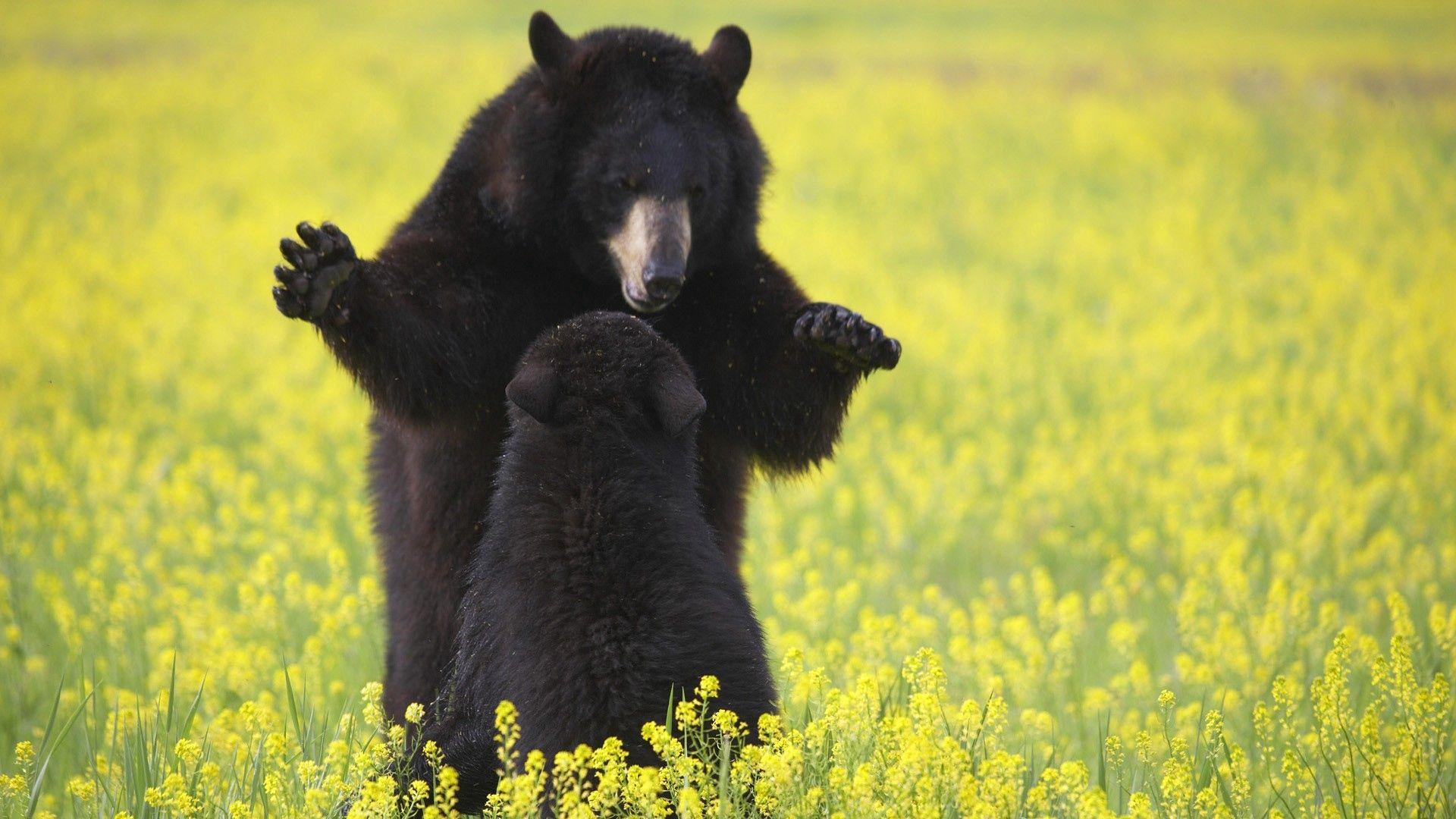 71160 Заставки и Обои Медведи на телефон. Скачать Медведи, Животные, Цветы, Трава, Детеныш картинки бесплатно