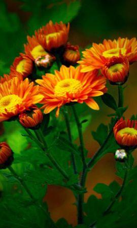 14362 скачать обои Растения, Цветы - заставки и картинки бесплатно