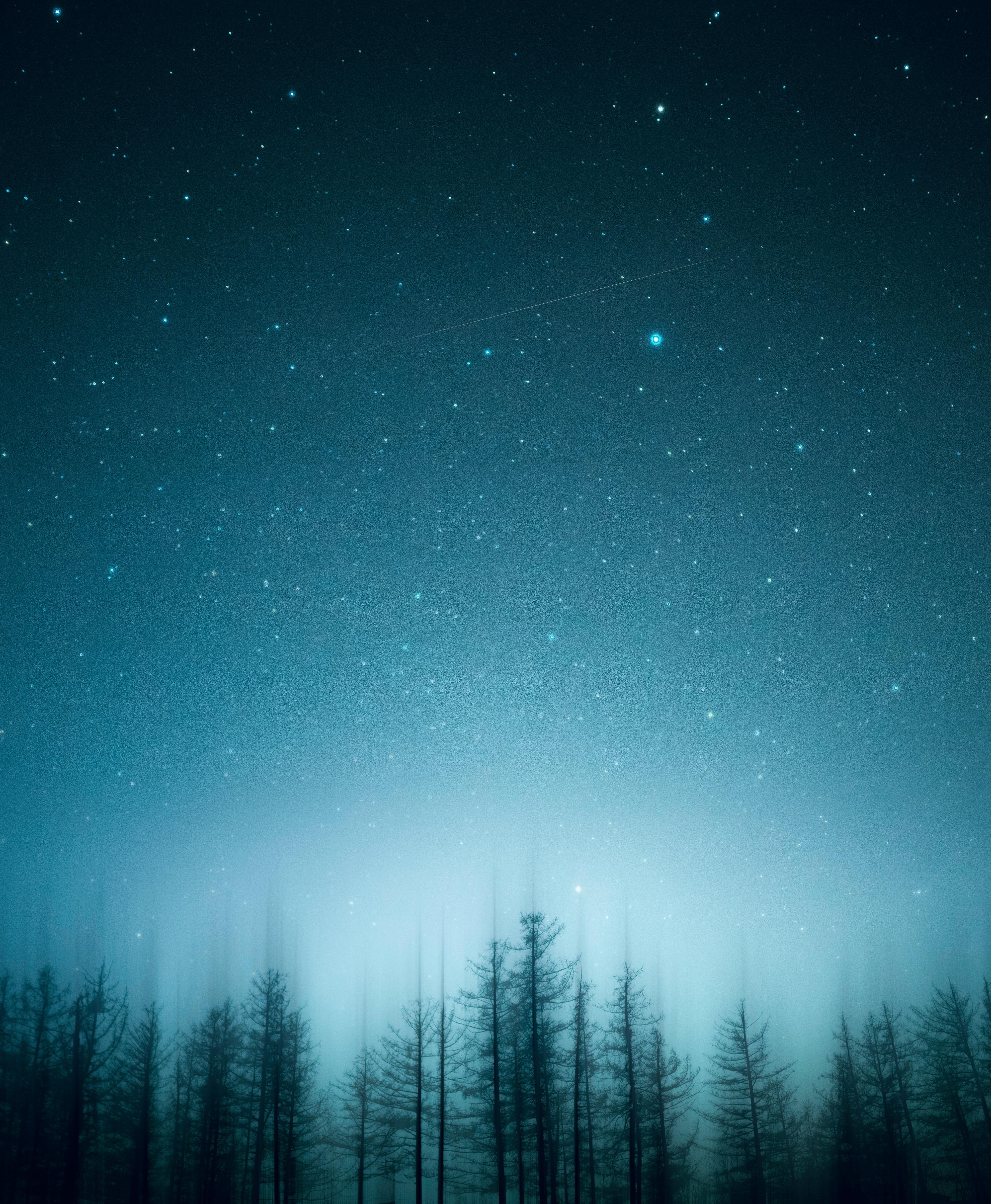 免費壁紙118725:性质, 树, 星空, 夜, 模糊, 无水, 松 下載手機圖片