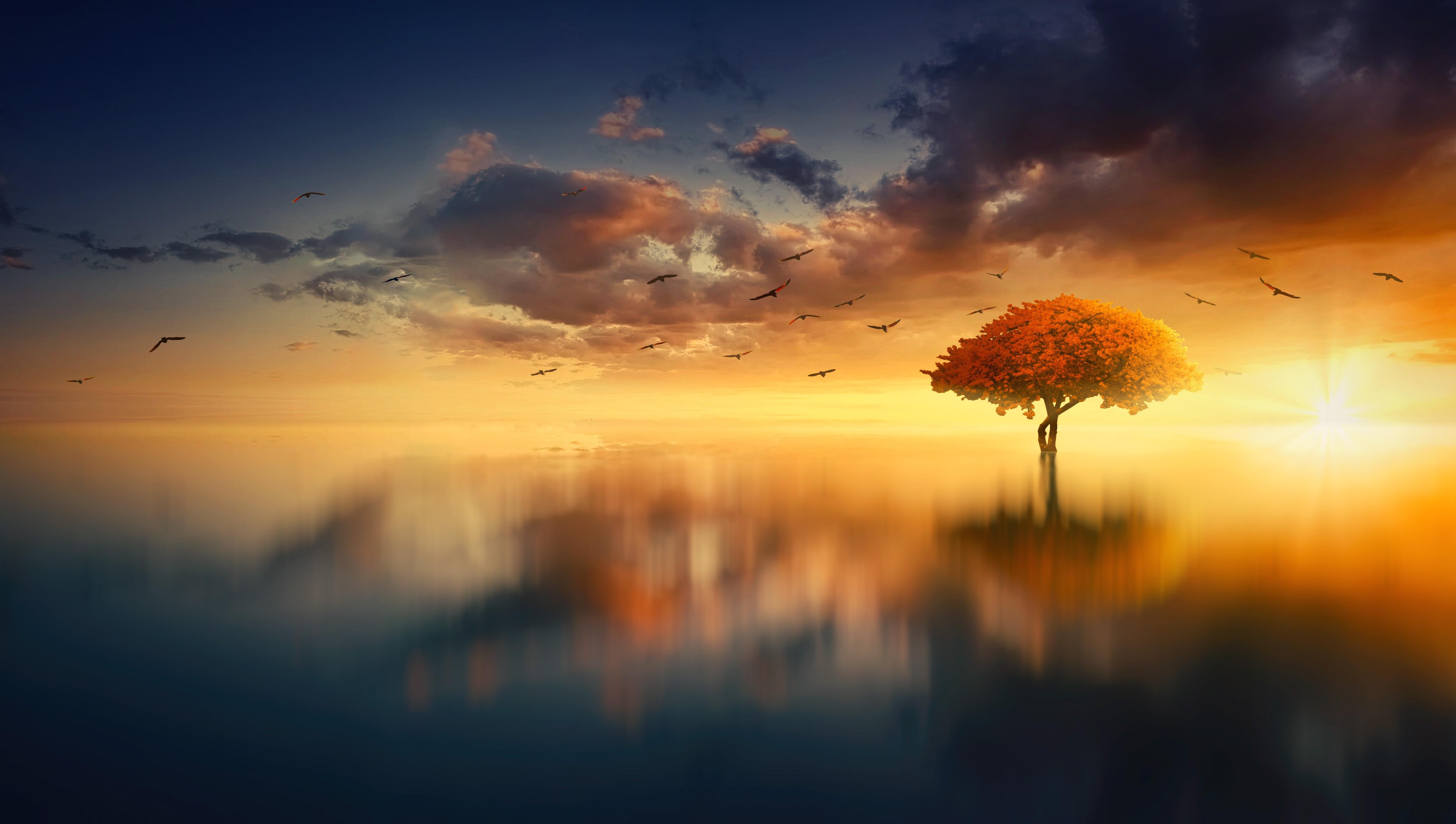 137515壁紙のダウンロード自然, 木材, 木, 地平線, 日没, Photoshop, フォトショップ, 海-スクリーンセーバーと写真を無料で