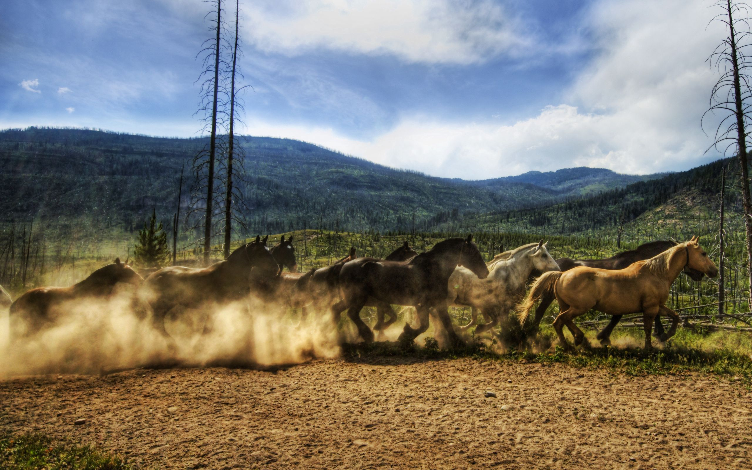 156707 download wallpaper Animals, Horses, Herd, Run, Running, Sky, Dust screensavers and pictures for free